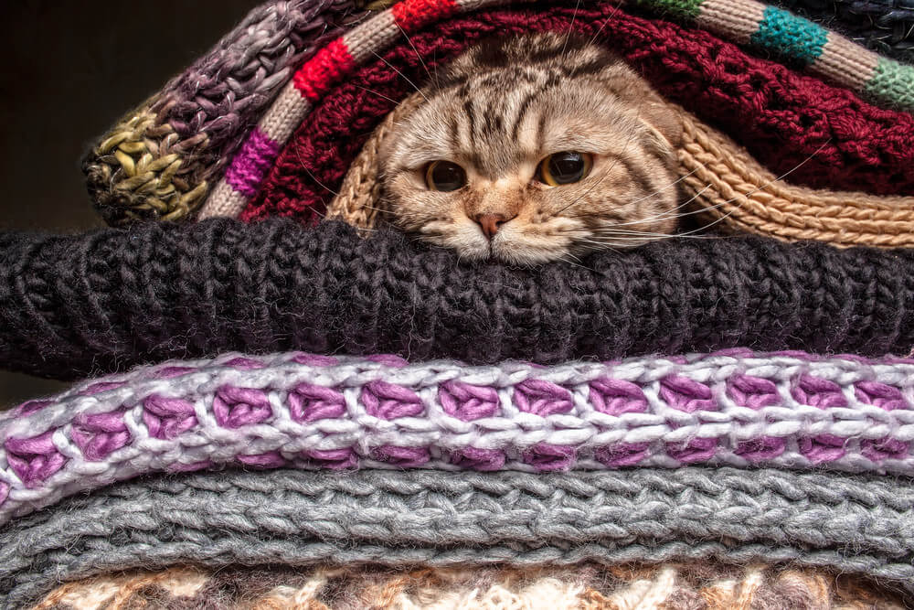 kedi-kopek-ve-orgu-15