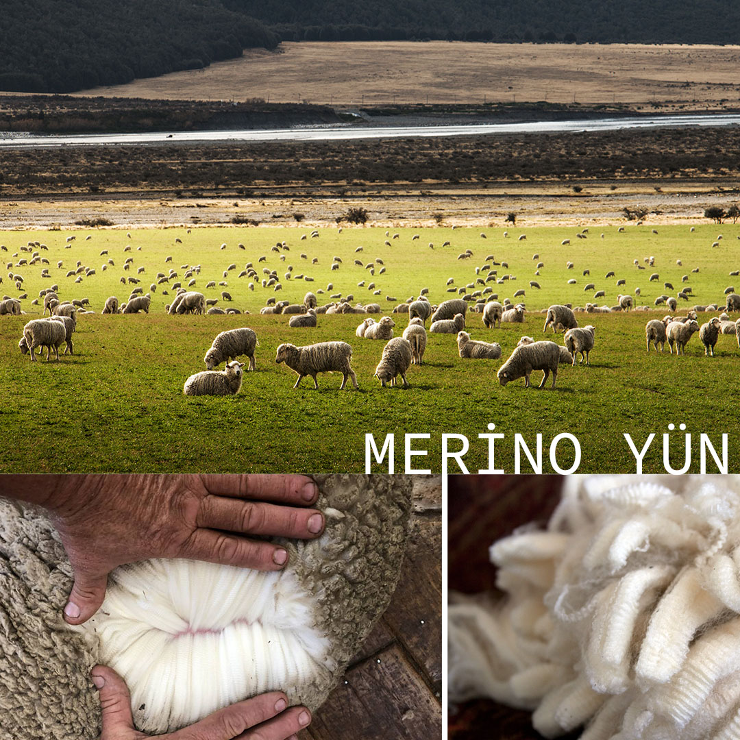 merino-yun-tarihi-1